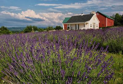 Lockwood Lavender Farms