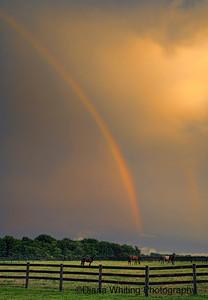 Horses and  Rainbow