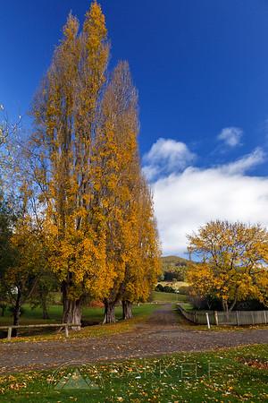 Colours of Tasmanian Autumn