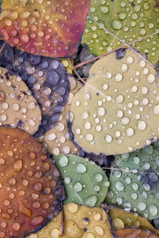"""Aspen Rain"""