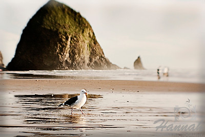 View of a seagull walking on the shore with the Haystack Rock at the background. Located in Cannon Beach, Oregon Coast Shot with the Lensbaby composer with double glass optic.  © Copyright Hannah Pastrana Prieto