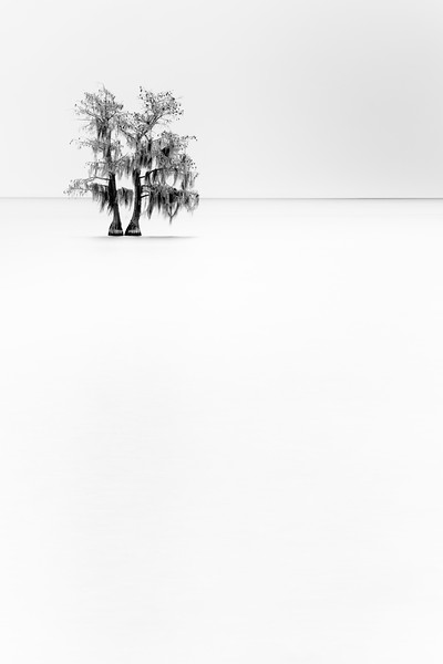 """Cypress"""