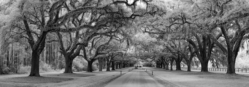 """""""Oak Tree Avenue"""""""
