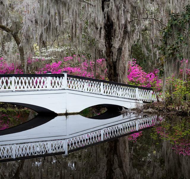 """""""Magnolia Bridge"""""""