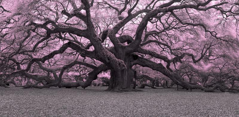 """""""Pink Oak"""""""