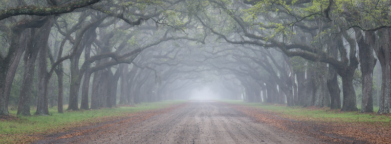 """""""Oaks in Rain"""""""