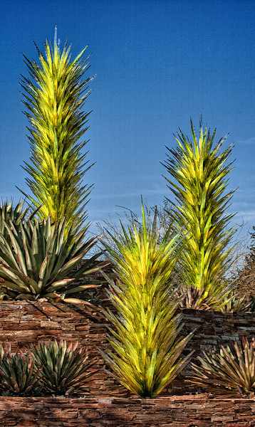 Chihuly Glass <br /> Desert Botanical Garden <br /> Phoenix, Arizona