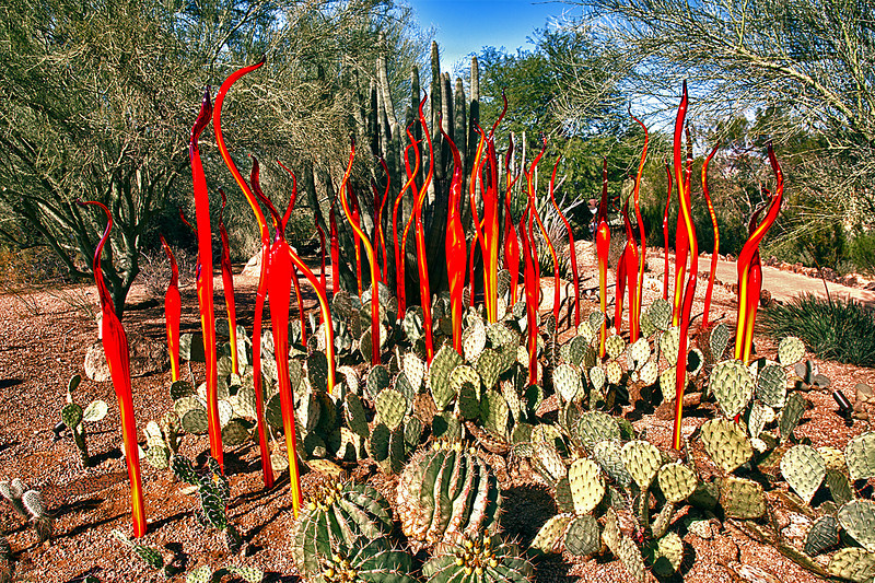 Chihuly Glass U003cbr /u003e Desert Botanical Garden U003cbr /u003e Phoenix, Arizona