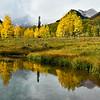 Aspen Grove, Maroon Bells, Elk Range