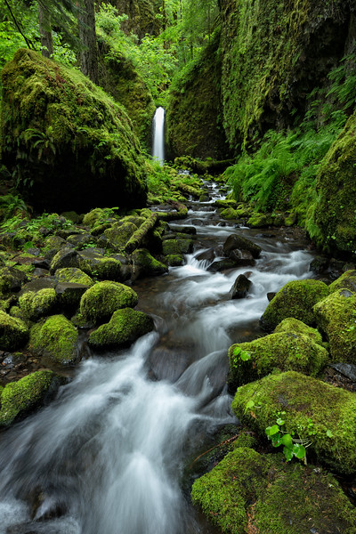 """Mossy Grotto"""