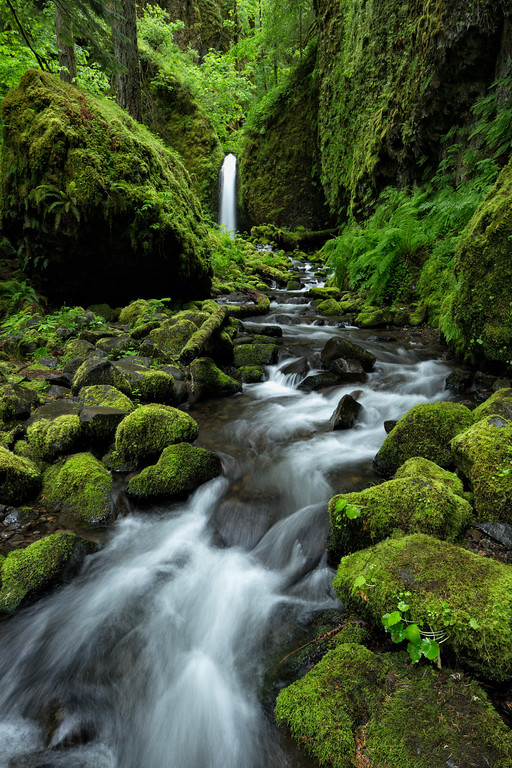 """""""Mossy Grotto"""""""