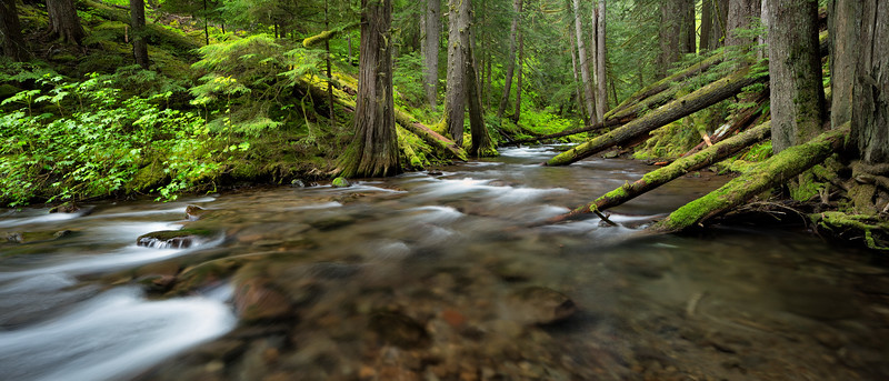 """""""Forest Creek Panorama"""""""