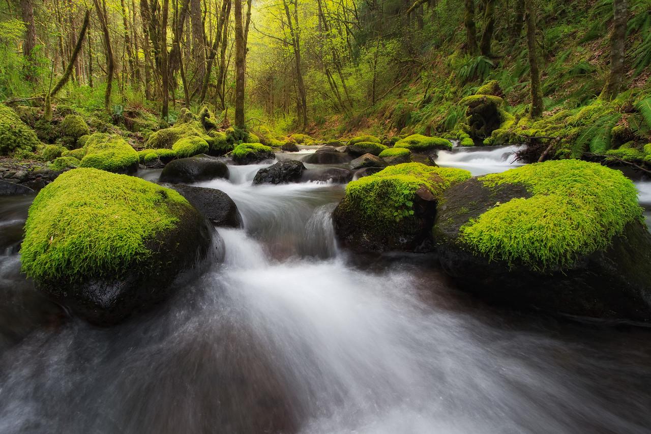 """""""Gorton Creek"""""""