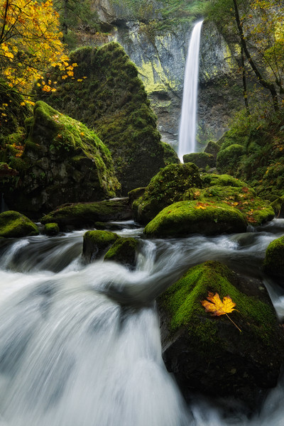 """""""Elowah Falls"""""""