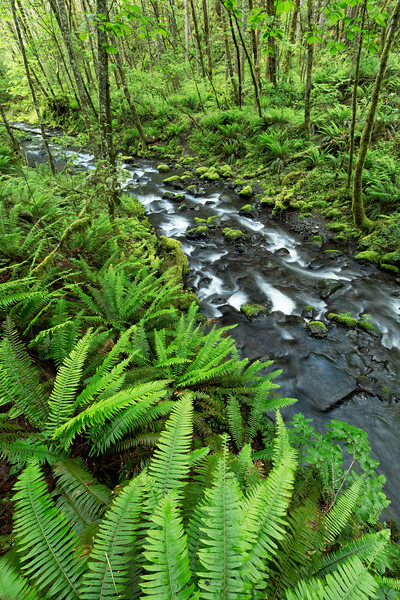 """Fern Creek"""