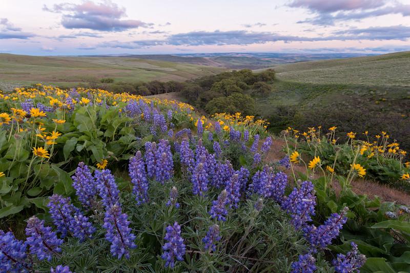 """Spring Hills"""
