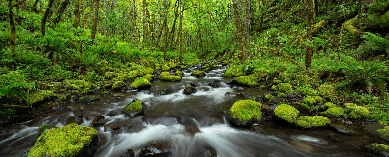 """Gorton Creek Panorama"""
