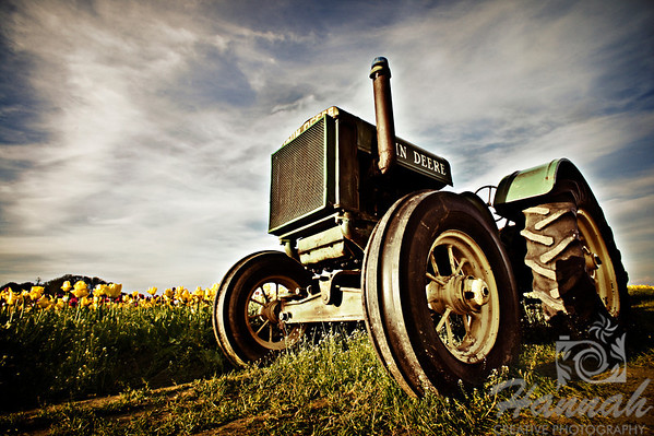Close-up of a tractor at a tulip field taken at Wooden Shoe Tulip Farm in Woodburn, OR  © Copyright Hannah Pastrana Prieto