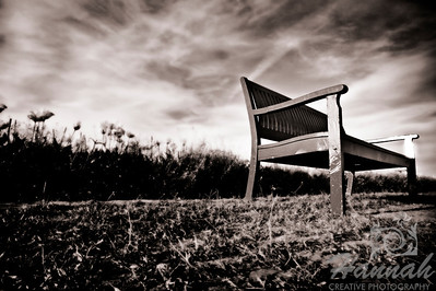 A monochrome shot of a bench at a tulip field taken at Wooden Shoe Tulip Farm in Woodburn, OR  © Copyright Hannah Pastrana Prieto