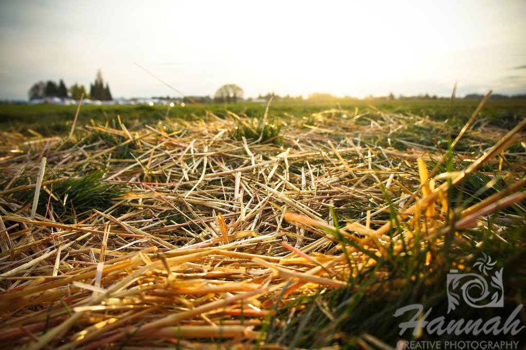 Close-up of hay on the ground.   © Copyright Hannah Pastrana Prieto