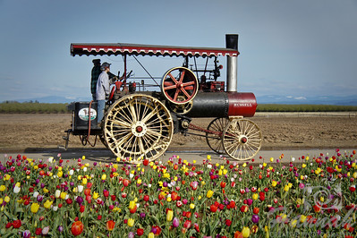 Old steam engine at a tulip farm. Taken at Wooden Shoe Tulip Farm in Woodburn, OR   © Copyright Hannah Pastrana Prieto