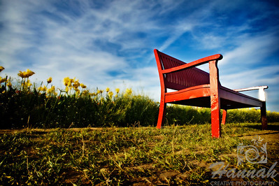 A reddish brown bench at a tulip field taken at Wooden Shoe Tulip Farm in Woodburn, OR  © Copyright Hannah Pastrana Prieto