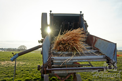 Bunch of hay on a cutting machine with the sun peaking.    © Copyright Hannah Pastrana Prieto