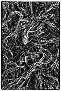 Sagebrush branches, Alabama Hills.