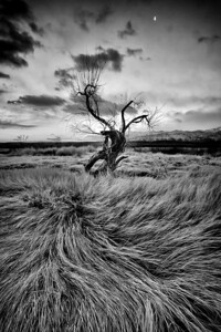 A lone tree in the Owens Valley just outside Bishop.