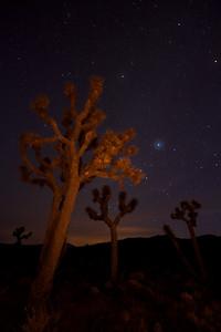 Light painting on Joshua trees, Lee Flats, Death Valley.