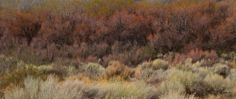 Foliage in the Alabama Hills near Lone Pine.