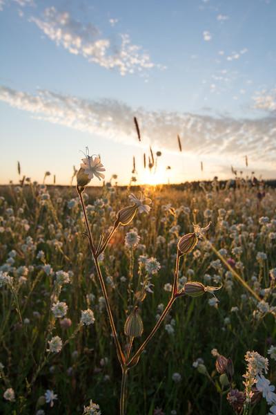 Prairie Rises