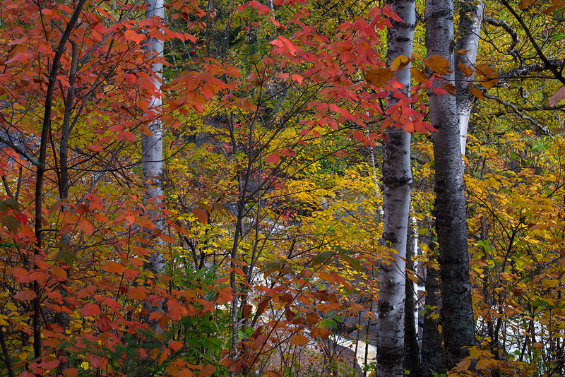 Autumn's Kaleidoscope