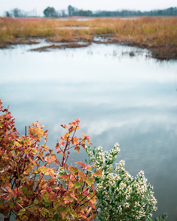 Fall Marsh Vista