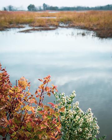 Fall Marsh Vista