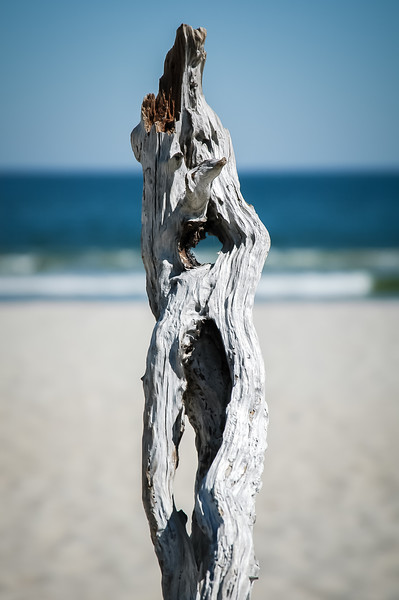 Driftwood Portrait with Ocean