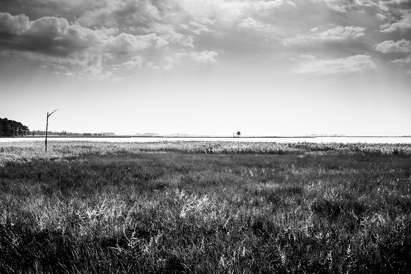 Blackwater National Wildlife Refuge Marsh Vista
