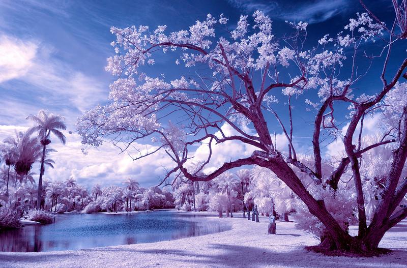 A magical landscape