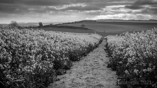 Signed Postmans Path in Black & White