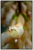 Fairchild Tropical Garden<br /> Coral Gables, Florida<br /> <br /> Nikon D3<br /> Tamron 90 mm macro lens