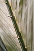 Palm leaf detail<br /> Fairchild Tropical Garden<br /> Coral Gables, Florida<br /> <br /> Nikon D3<br /> Tamron 90 mm macro lens