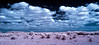 Everglades tableau<br /> False Color infrared<br /> near Flamingo in the Everglades National Park