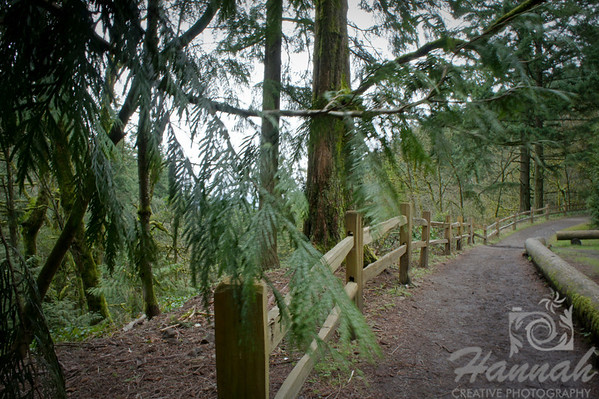 Hiking trail with wooden fence at Forest Park in Portland, Oregon  © Copyright Hannah Pastrana Prieto