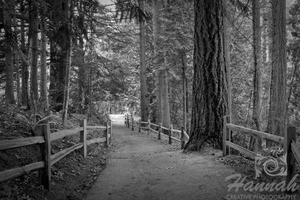 Black and white fine arts image of a hiking trail with wooden fence located at Forest Park in Portland, Oregon  © Copyright Hannah Pastrana Prieto