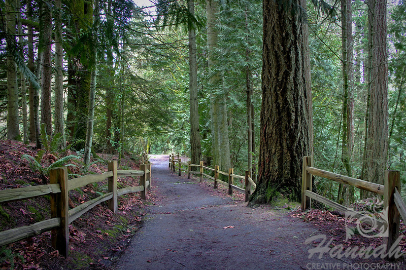 Image of a hiking trail with wooden fence located at Forest Park in Portland, Oregon   © Copyright Hannah Pastrana Prieto