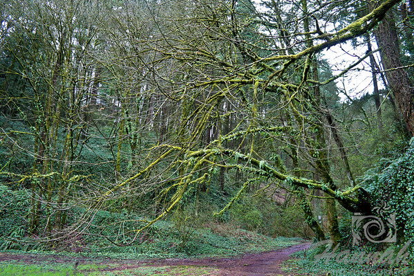 Muddy hiking trail at Forest Part in Portland, Oregon  © Copyright Hannah Pastrana Prieto