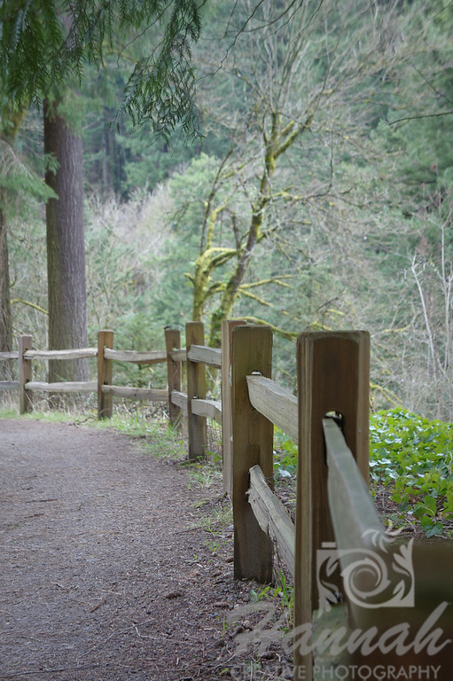 Fence at a hiking trail in Forest Park at Portland, Oregon  © Copyright Hannah Pastrana Prieto