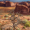 Monument Valley Spruce