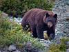 bear_D047854