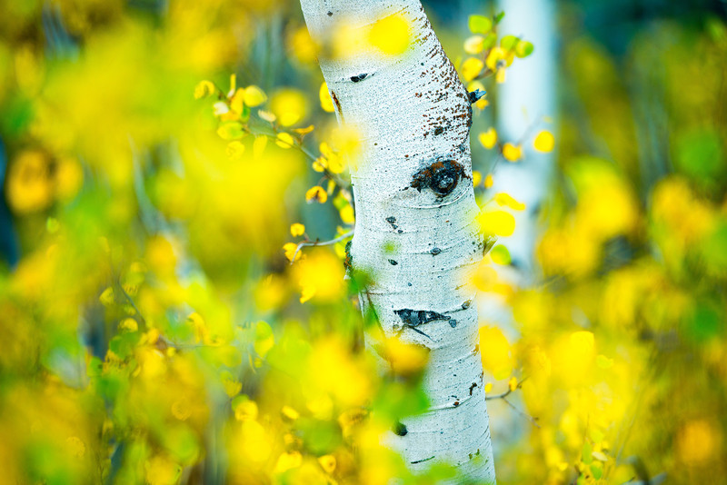 Eye of the Aspen tree<br /> Two Medicine Area